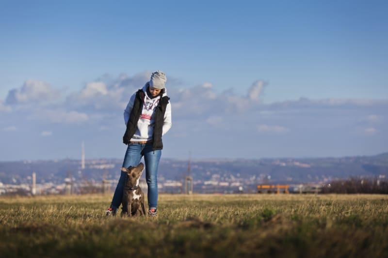Welpe Hundetrainerin Dresden