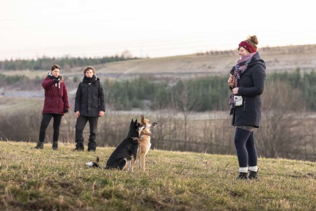 Aufmerksame Hunde bei der Hundeschule